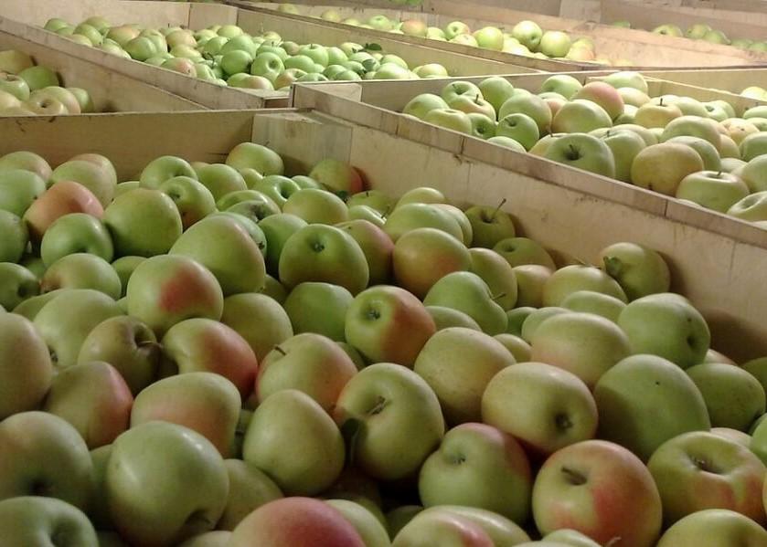 На Кубани построили хранилище на 9 тыс. тонн фруктов и ягод