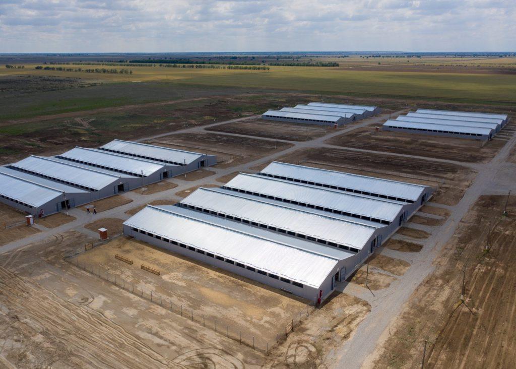 Крупнейший комплекс по производству баранины создают на Ставрополье